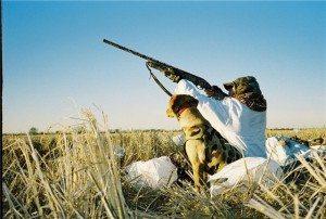 Waterfowl hunts with bird dog in Minnesota