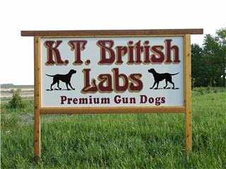 British Hunting Labs in Minnesota
