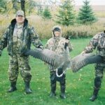 Canadian Goose Hunting