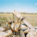 Goose Hunts in Minnesota