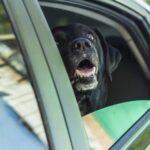Labrador Tips